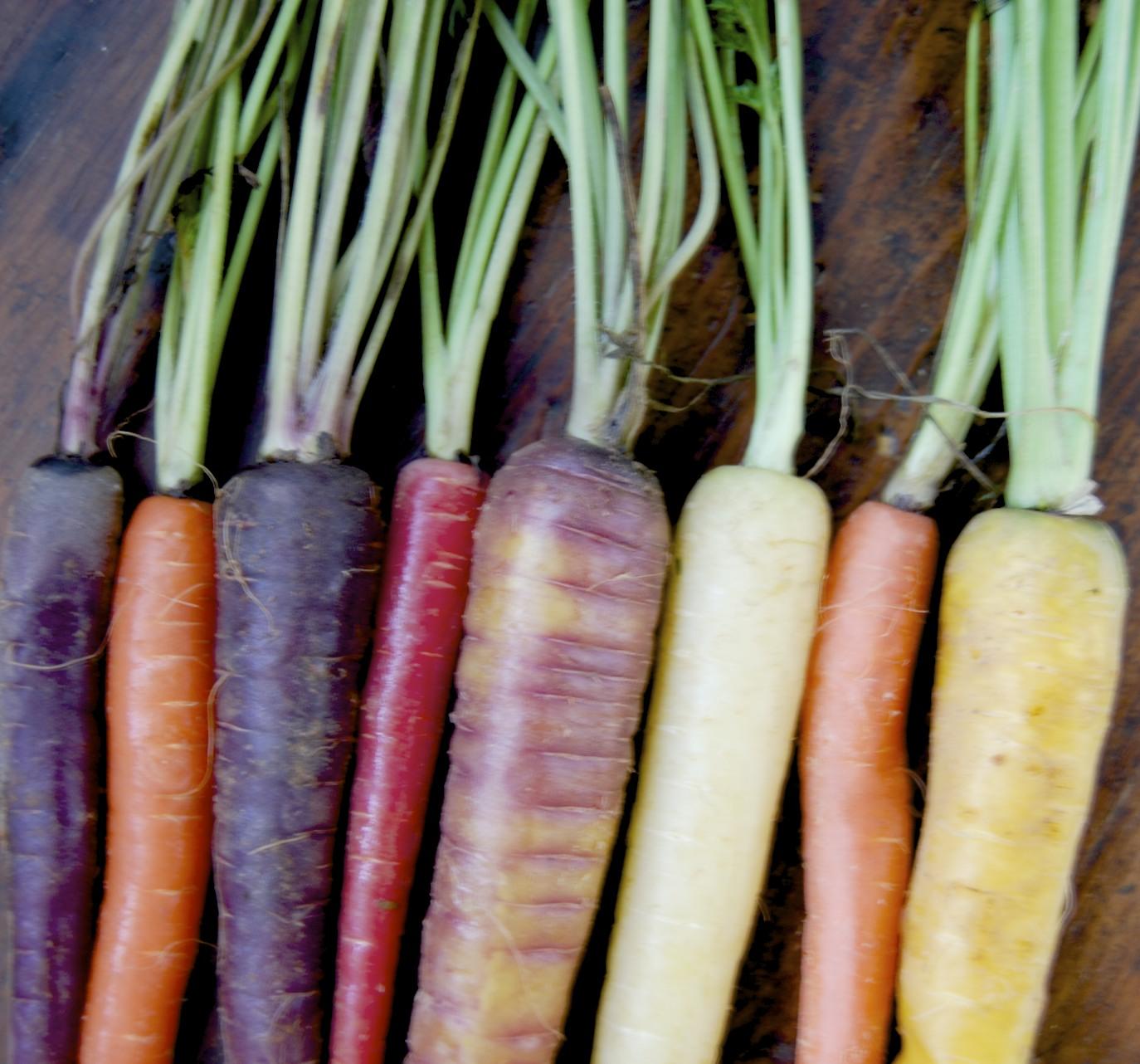 Organic Rainbow Carrots Organic Rainbow Carrots
