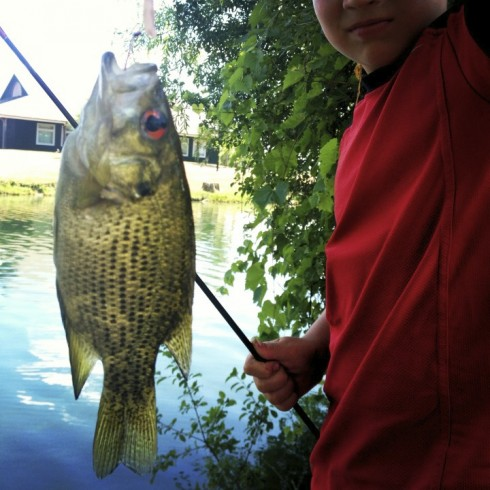 Catch of the day---fish #18, he says it's a rock bass. Yup, ok. Note: he is responsible for all removal of hooks and re-entry of the fish into the water. He's a pro.